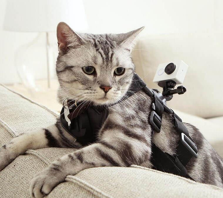 kreplenie-kamery-dlya-domashnih-pitomtsev