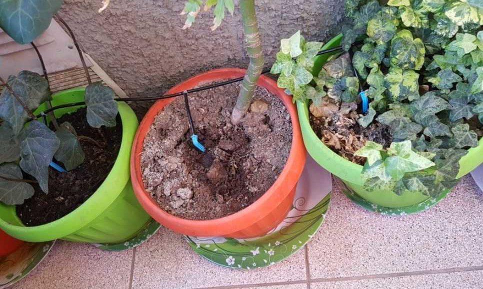 Автополив для домашних растений